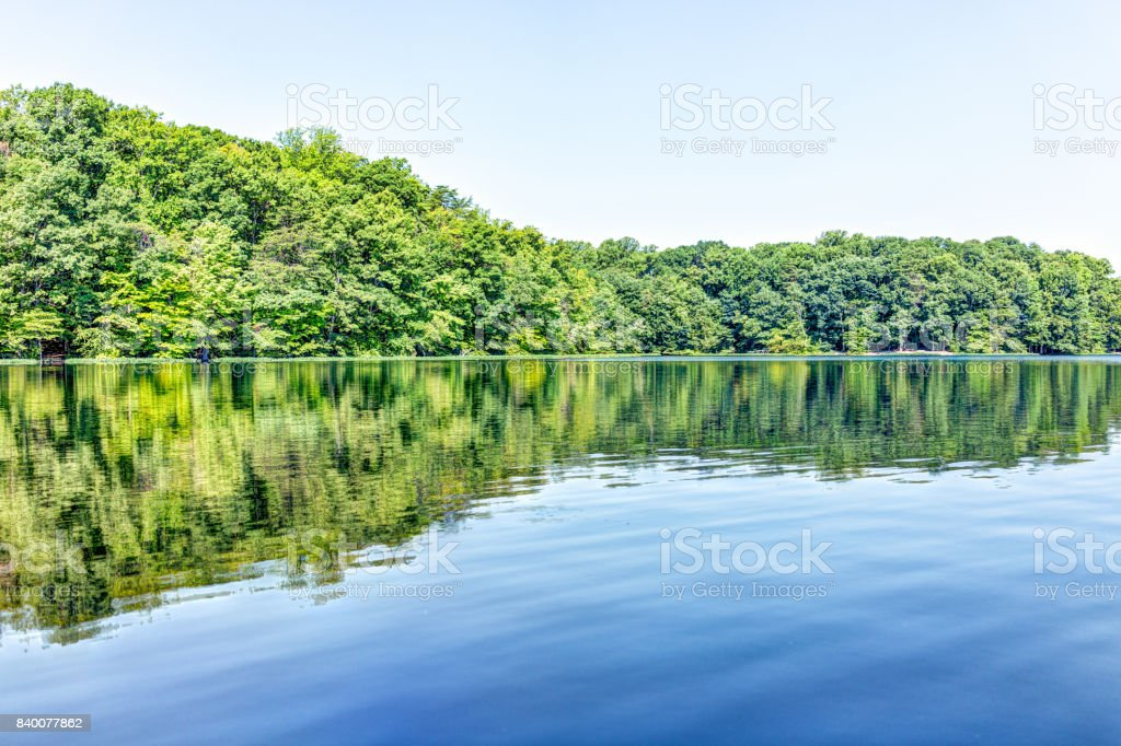 Burke lake trees forest woods reflection in summer on bright day with clear water stock photo