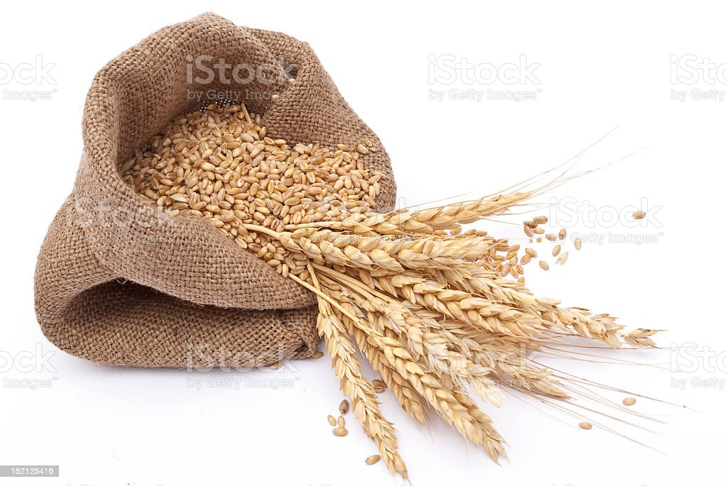 Burlap sack filled with wheat and grain royalty-free stock photo
