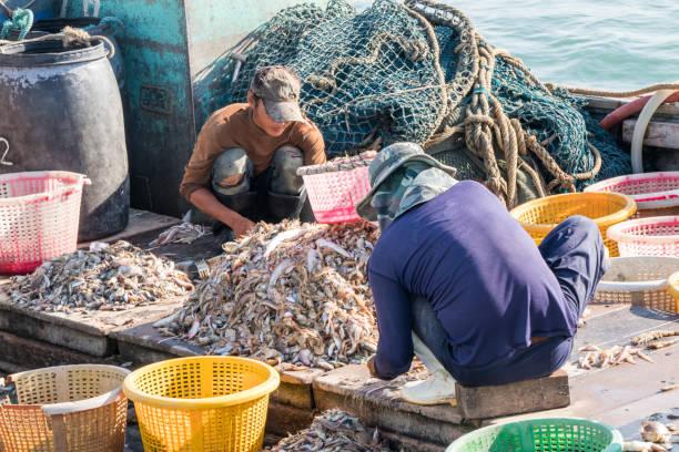 Birmanische Besatzung von thailändischen Fischerboot Sortieren Fisch – Foto