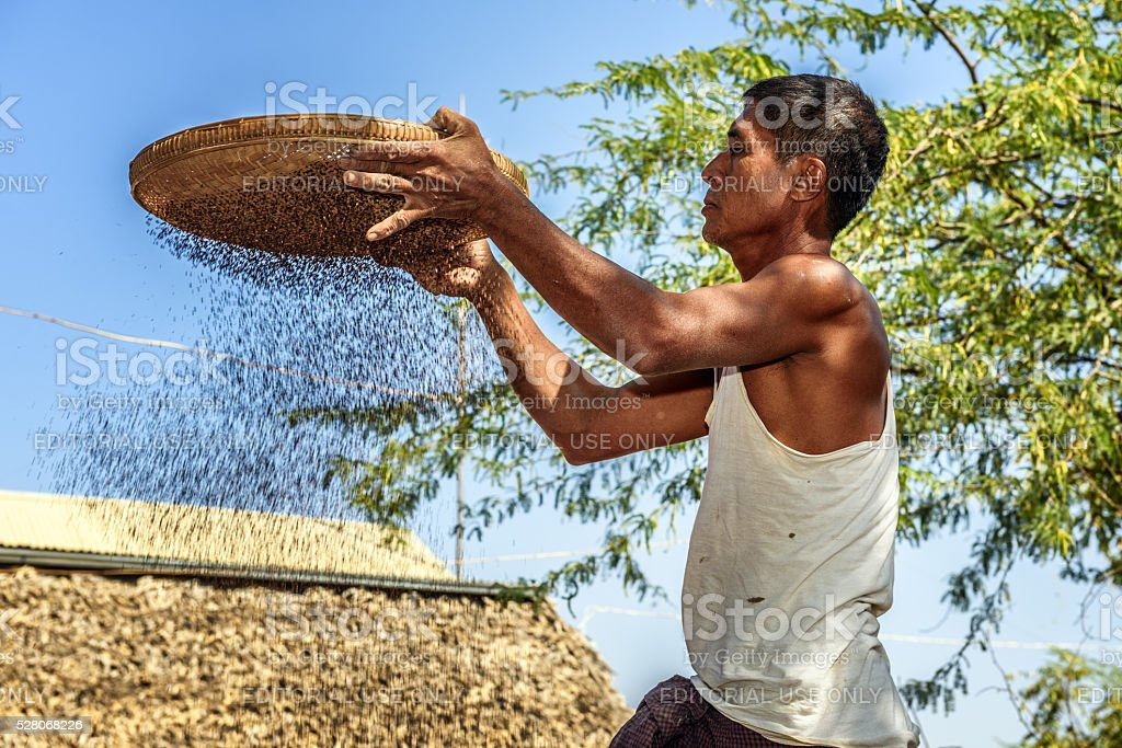 Burmese farmer sifts grains stock photo