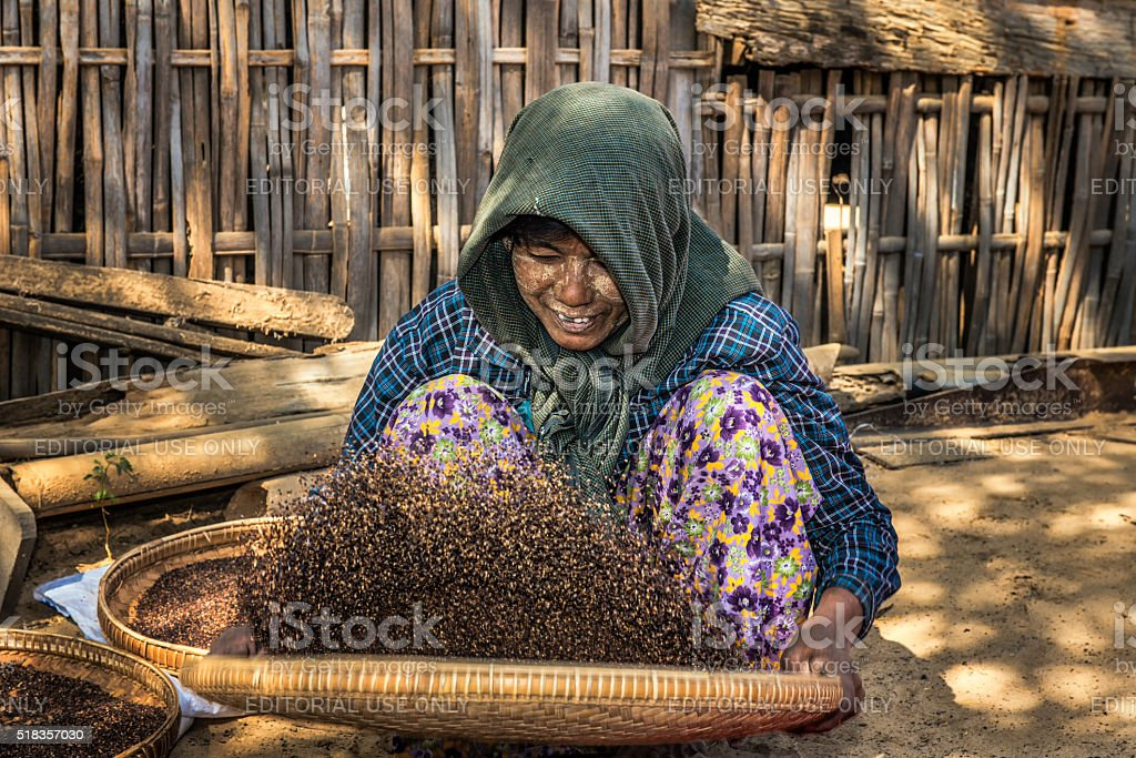 Burmese farmer woman threshes corn stock photo
