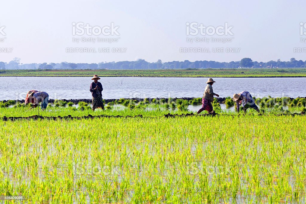 Burmese farmers stock photo