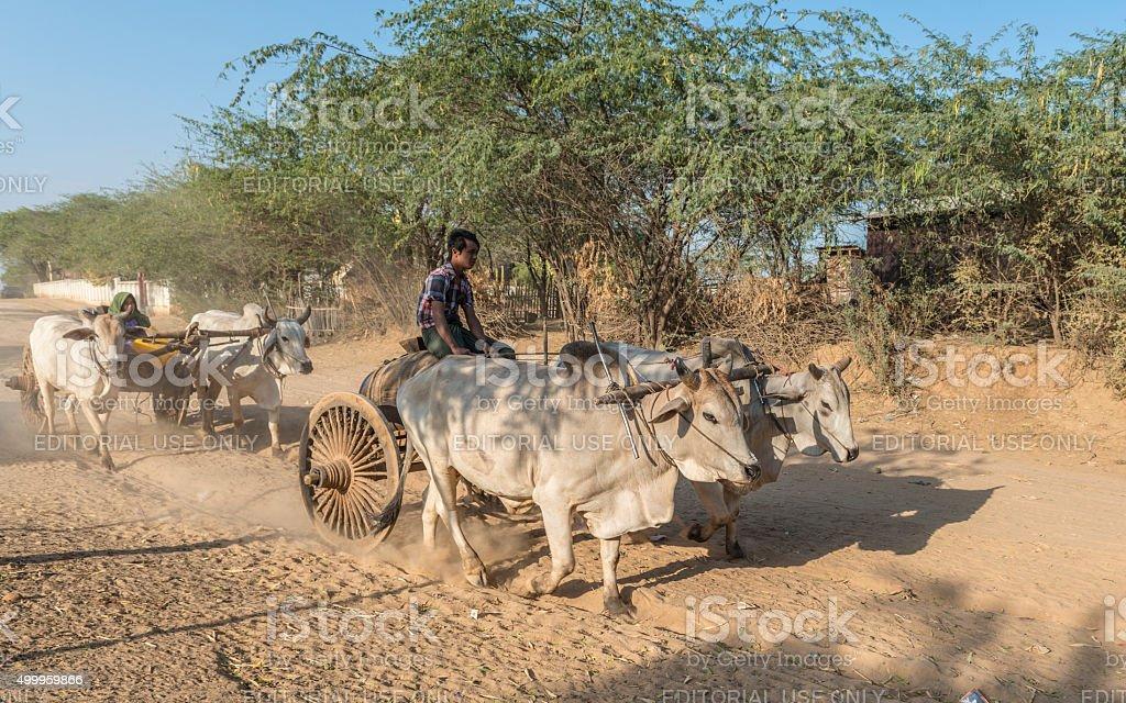 Burmese oxcarts transport water on dusty road, Bagan, Myanmar stock photo