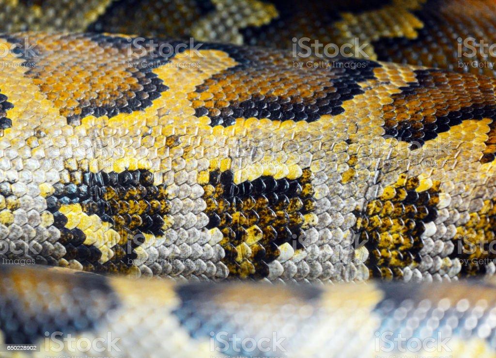 Burmese python skin stock photo