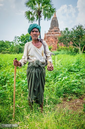 Burmese senior man, 73 years old agriculture worker, standing with wooden walking cane in his green backyard plantation field. Old Bagan Temple in the Background. Real People. Old Bagan, Myanmar, Asia.