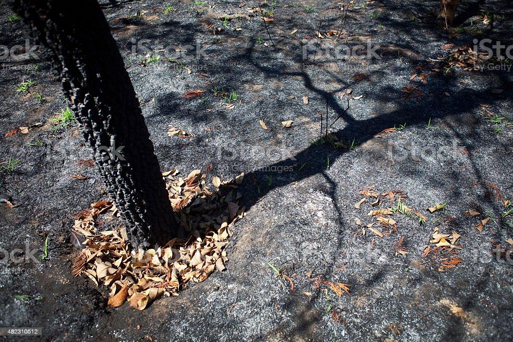 Queimadas brasileiro Savannah ou Cerrado com sombra de árvores - foto de acervo