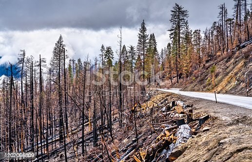 Burned down forest in Yosemite National Park - California, United States