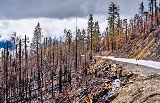 Burned down forest in Yosemite National Park, California