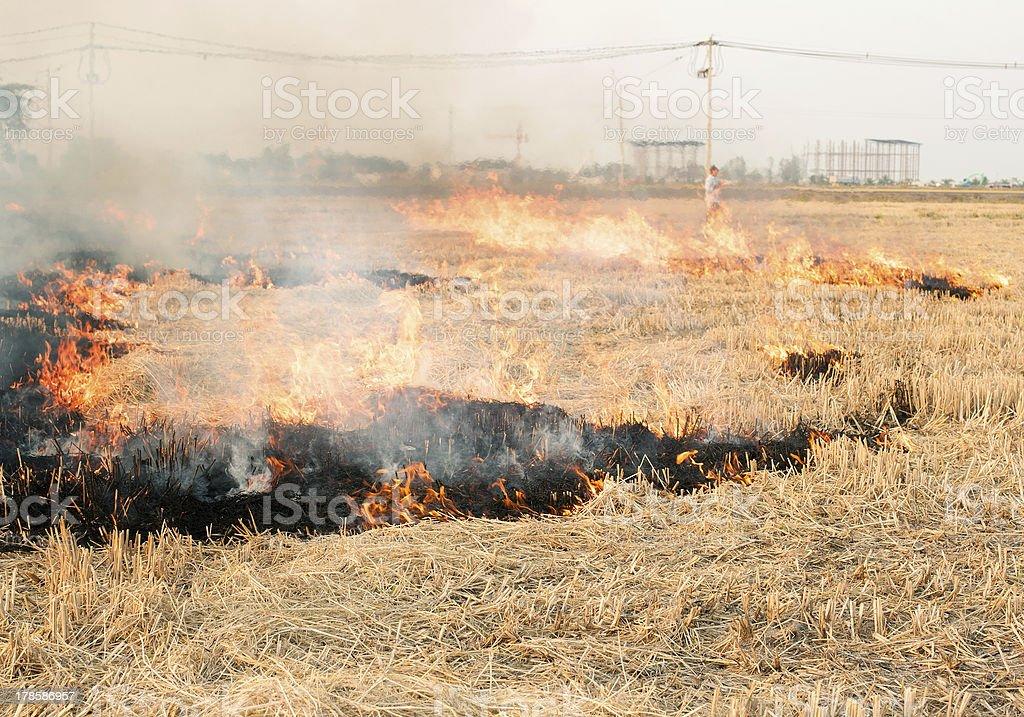 Burned fields stock photo