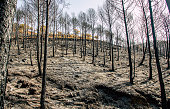 istock Burned forest after a huge fire 1156541189