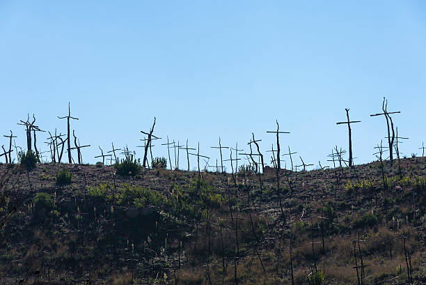 burned forest full of crosses made with branches - ash cross stock photos and pictures