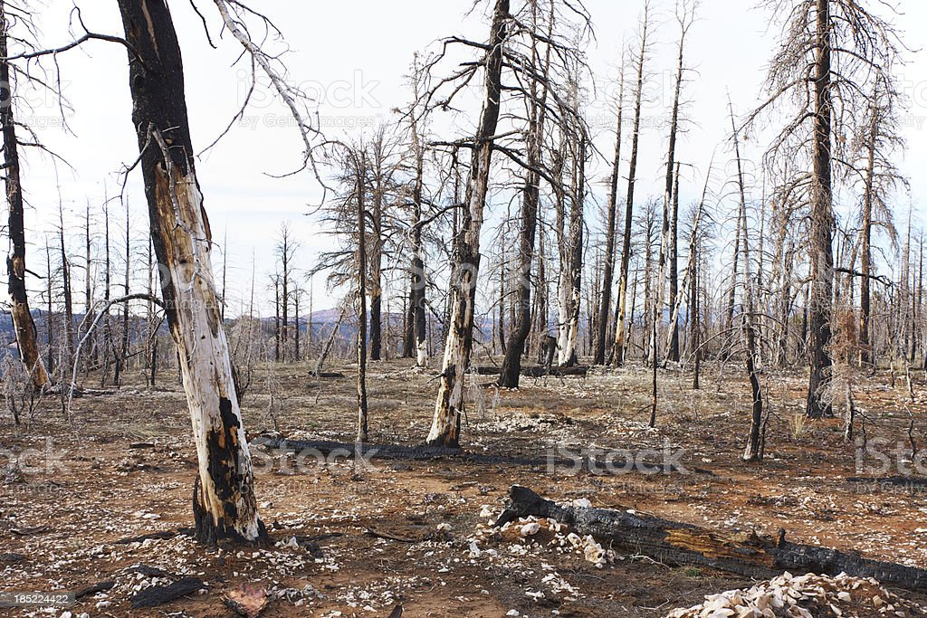 Burned forest in Bryce Canyon National Park stock photo