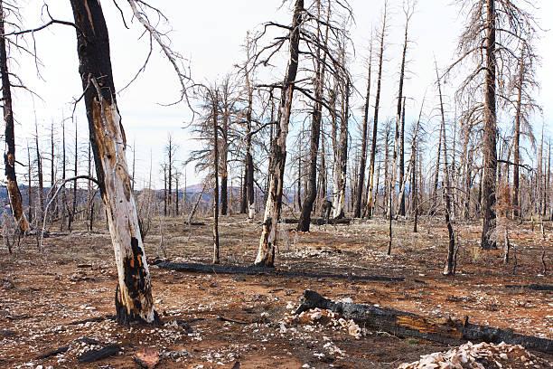 Resultado de imagen de bosques quemados