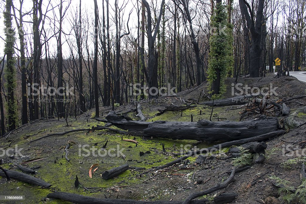 Burned forest royalty-free stock photo