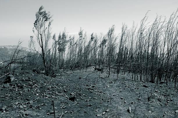verbrannt land sodass flaschen nach fire - disaster design stock-fotos und bilder