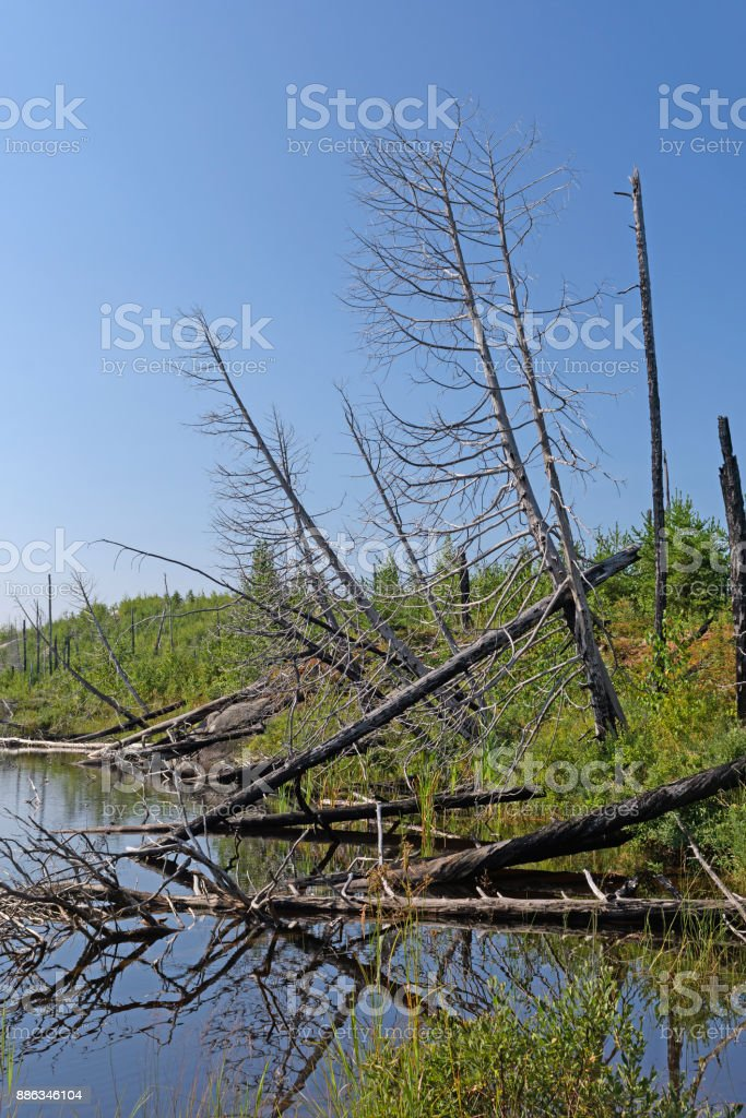 Burned Trees in a Wilderness Lake stock photo
