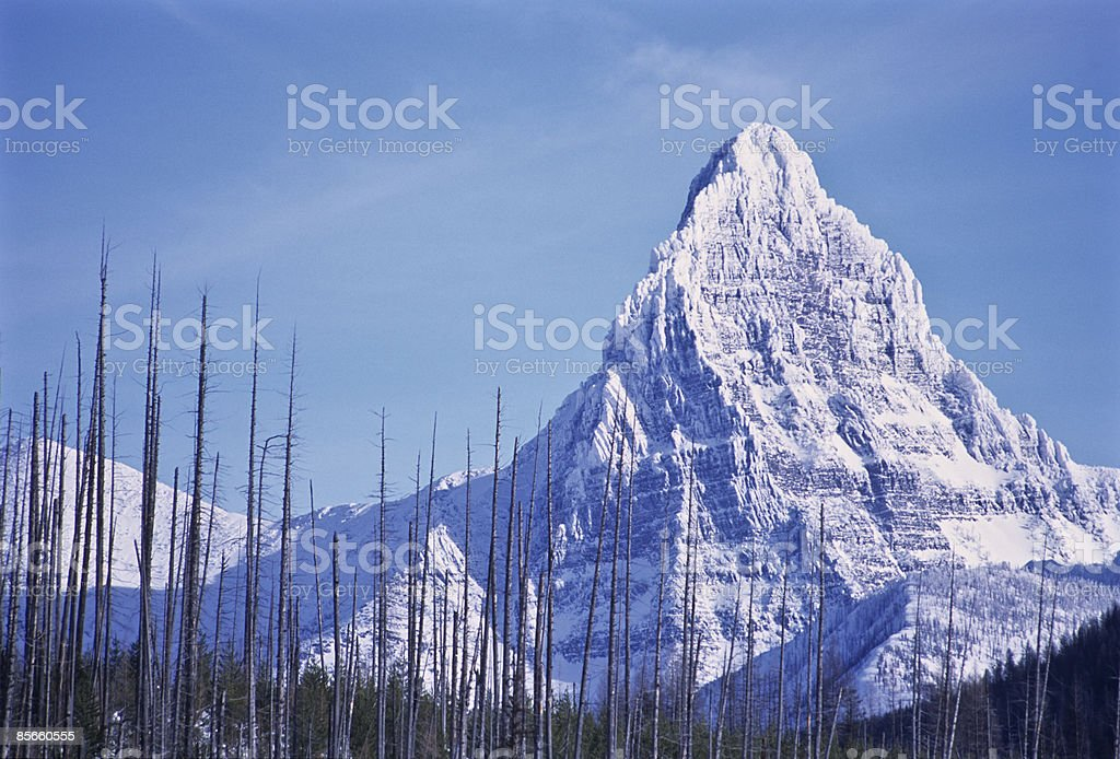 Burned trees standing against mountain. royalty-free stock photo