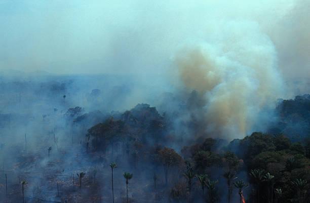 quemando el amazonas - deforestacion fotografías e imágenes de stock