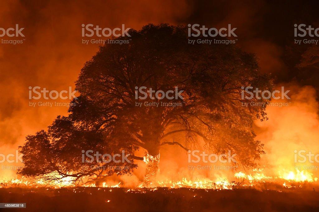Burning Ash Tree foto