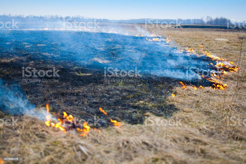 Burning autumn fields of dry grass stock photo