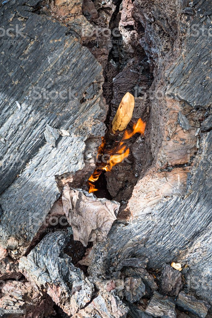 Burning branch ignited by heat of lava on Tolbachik Volcano royaltyfri bildbanksbilder