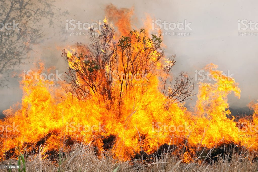 Burning Bush with Grass Fire and Smoke stock photo