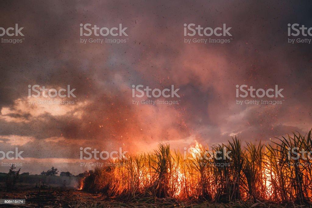 Burning Cane stock photo