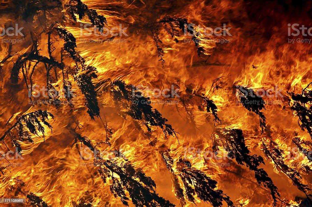 Burning Cedar Tree stock photo