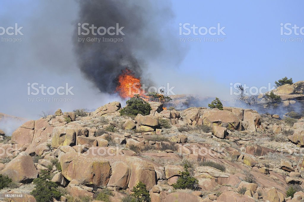 Burning Ceder Tree stock photo