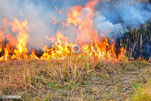 Burning dry grass and stubble in rice fields in the dry season in Thailand Southeast Asia Is an important factor that causes smoke in the atmosphere causing global warming And Green House Effects