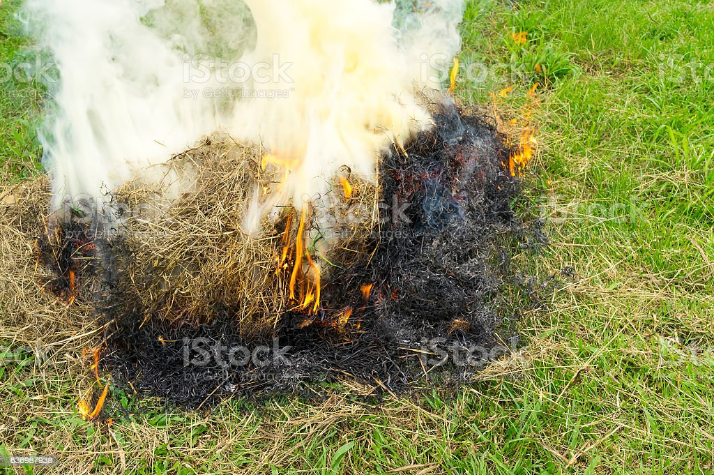Burning dry grass stock photo