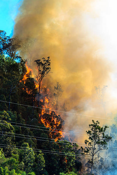 Burning Forest near Power Cables stock photo