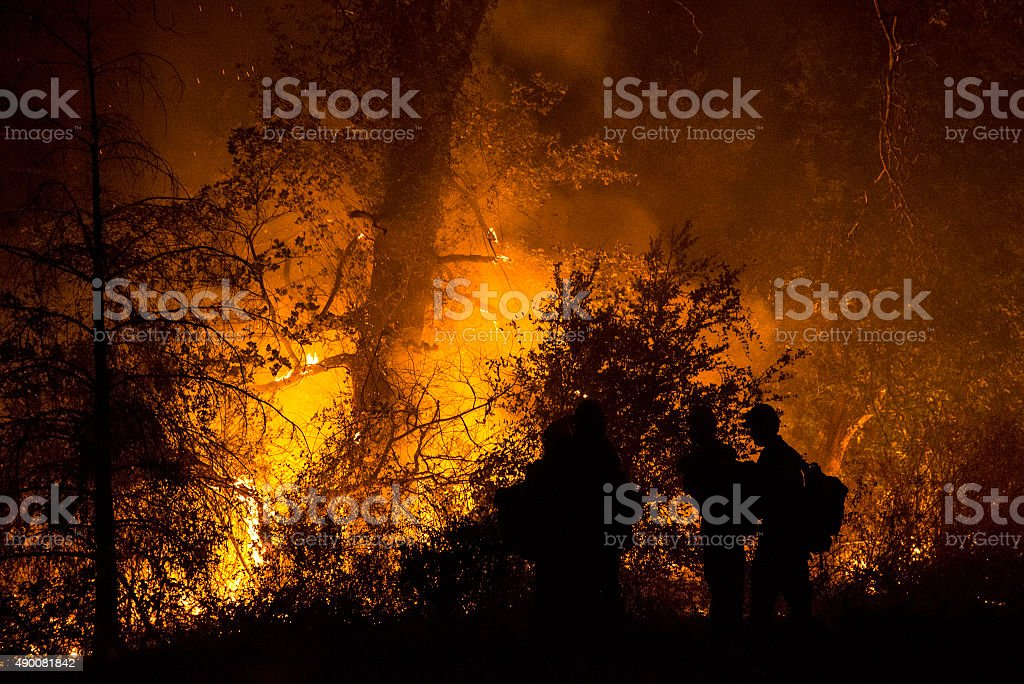 Burning forest – Foto