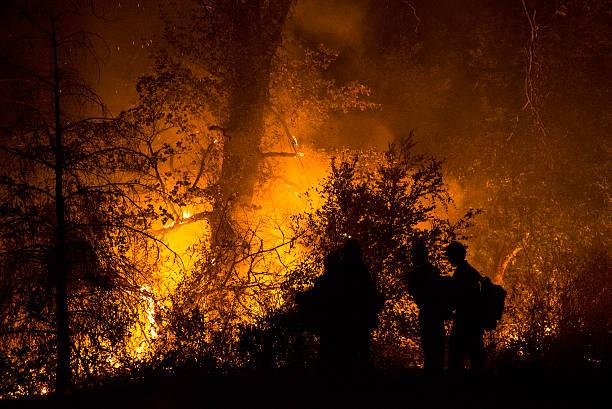 feu de forêt - 2015 photos et images de collection