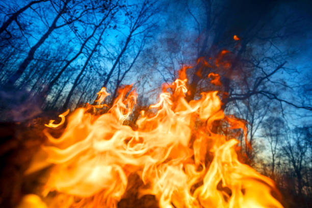 Burning forests and fields stock photo