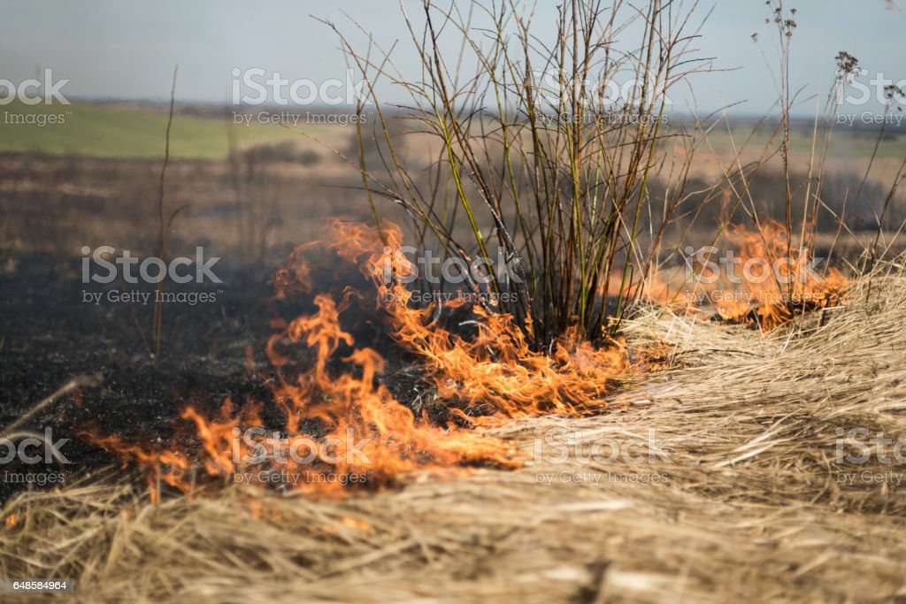 Burning grass in the field, shrubs and plants are burned, land covered with dark foto