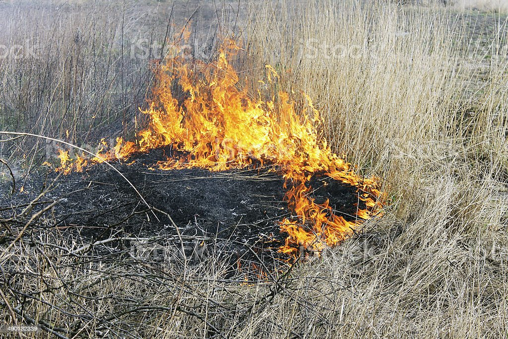 burning grass stock photo
