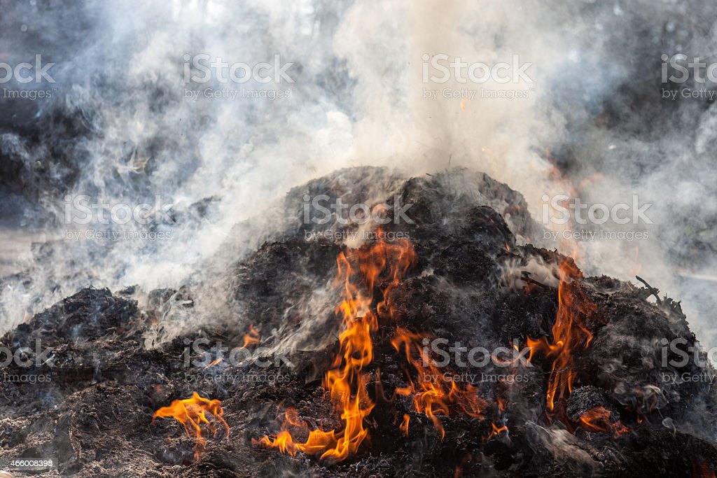 Burning last year's leaves and grass on the fire stock photo