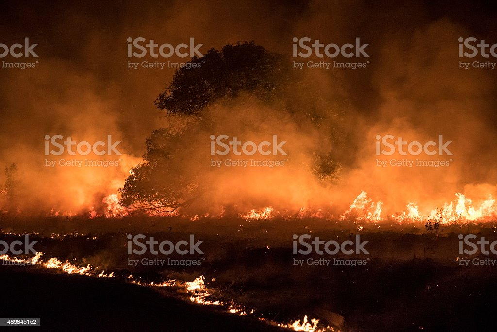 Burning meadow stock photo