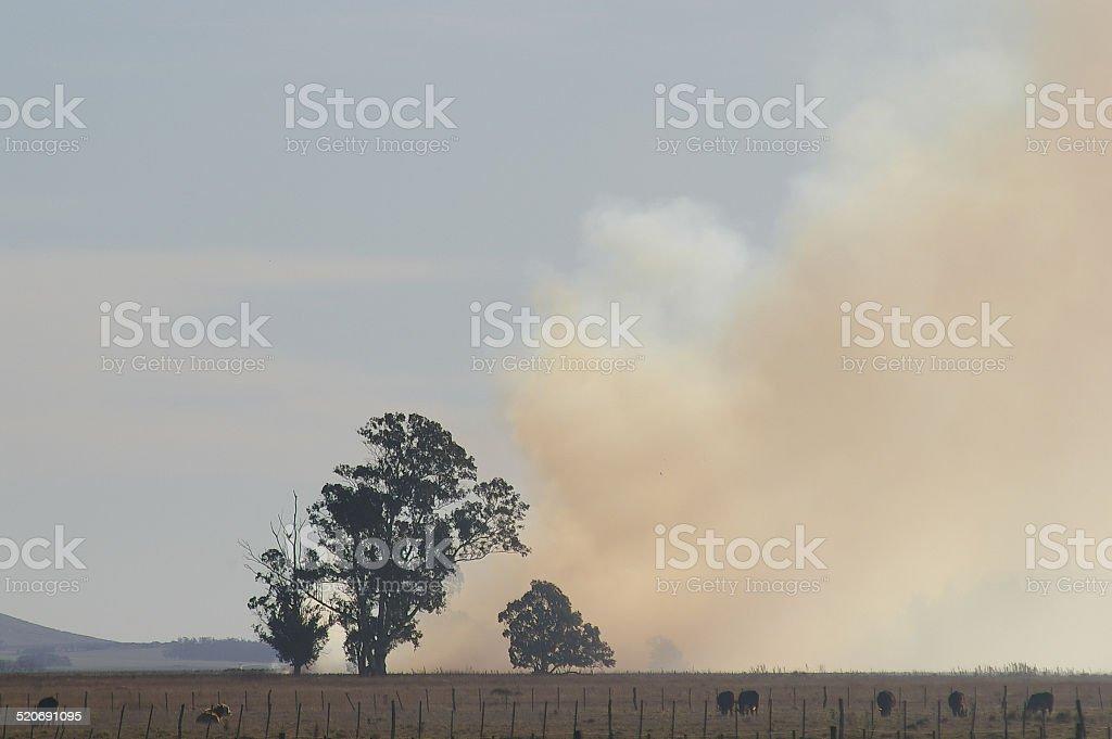 Burning of Grasslands stock photo