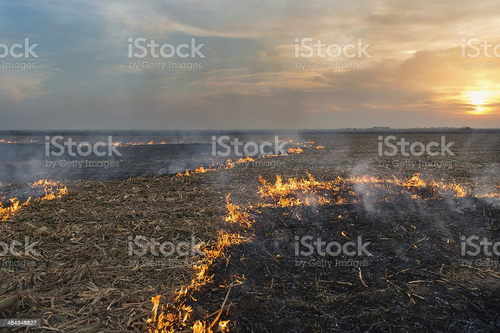 Burning of straw royalty-free stock photo