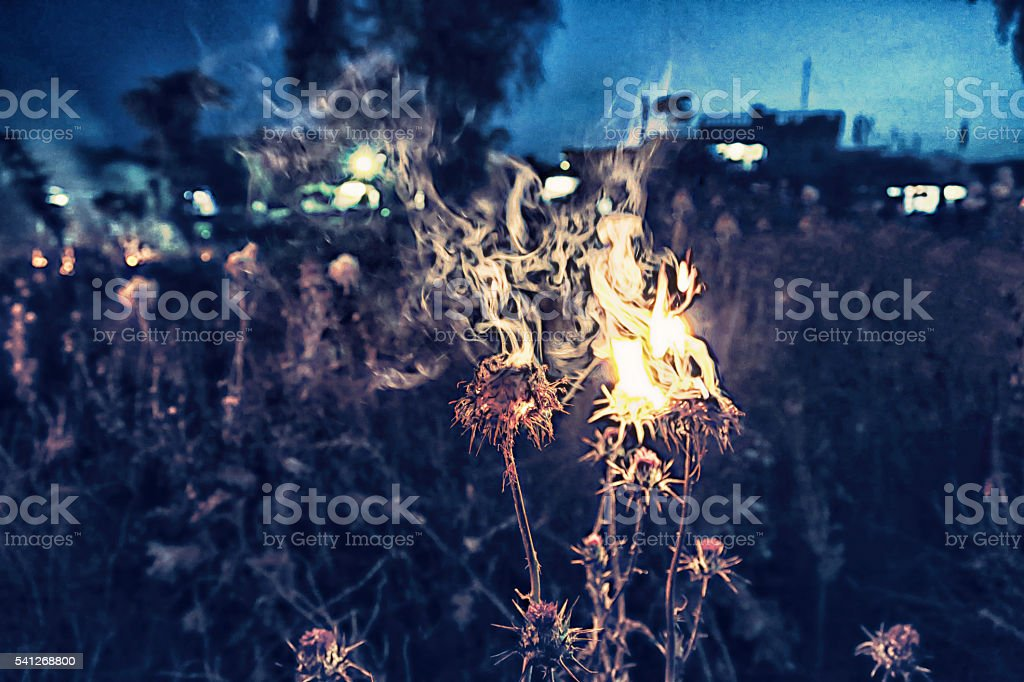 burning plants stock photo