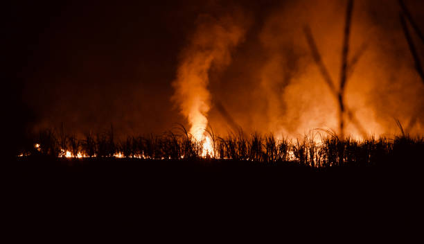 Burning plants with fire flames at night stock photo