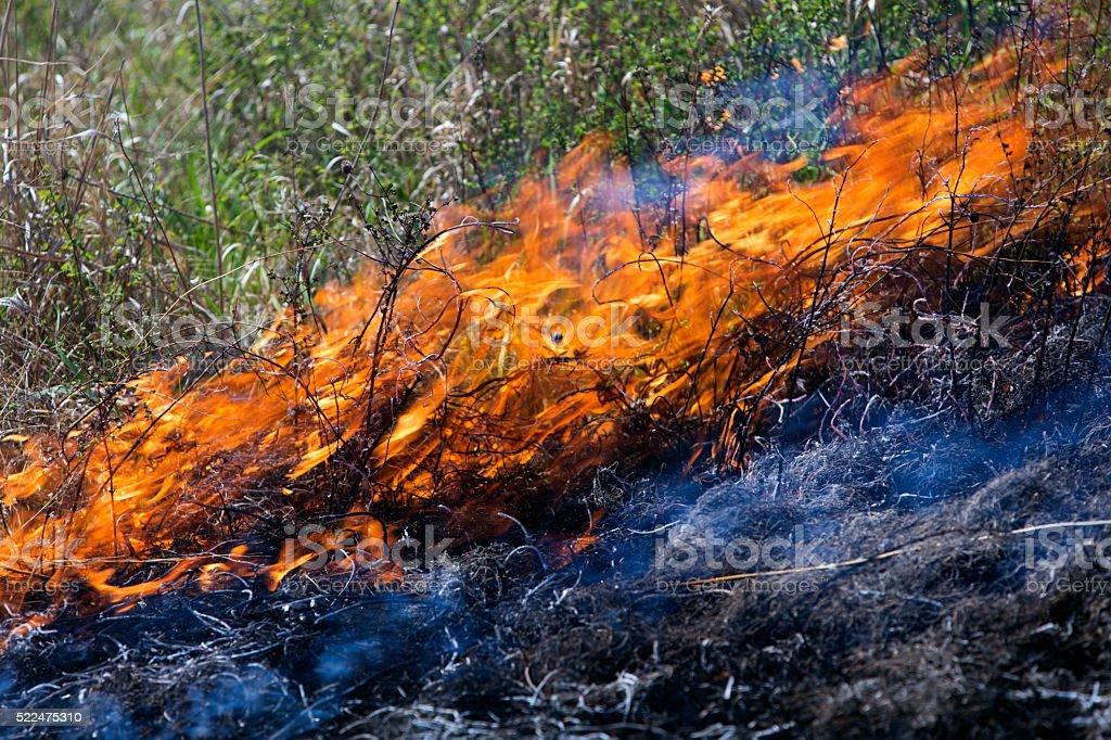 burning prairie grass stock photo