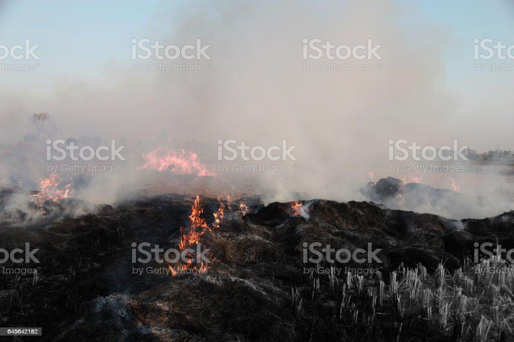 Burning Straws stock photo