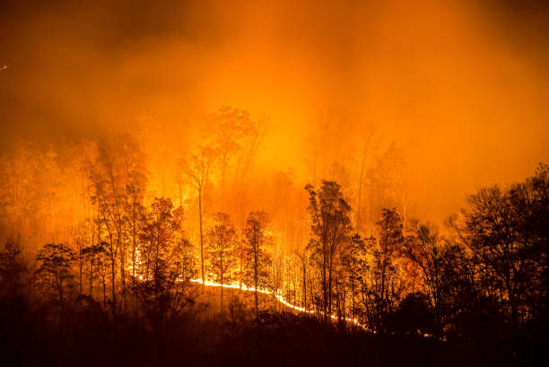 Burning wildfire line stock photo