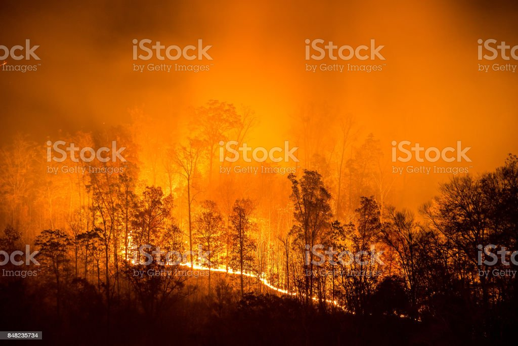 Burning wildfire line stock photo
