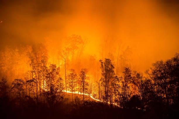branden wildvuur lijn - bosbrand stockfoto's en -beelden