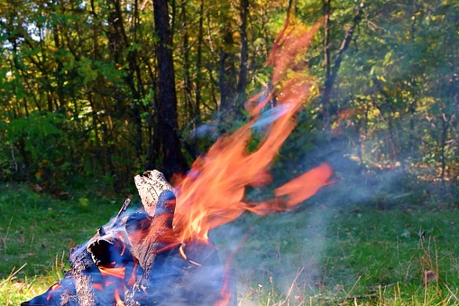 Burning wood ablaze hot fire on blurred background of green forest
