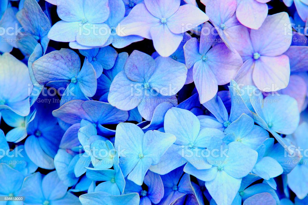 burnning blue stock photo